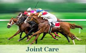 Equine Joint Supplement Comparison Chart Horse Vaccines Horse Ulcer Products Horse Products And