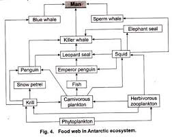 Components Of Ecosystem Flow Chart Ecosystem With Diagram