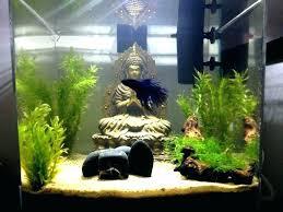Cheerful Cool Betta Fish Tanks X4128 Amazing Tank For Sale In Chennai Appealing 5 Litre Glass Bowl Aquarium