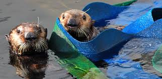 The Marine Mammal Center : Home