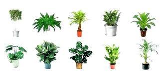great office plants. 9 Great Office Plants M