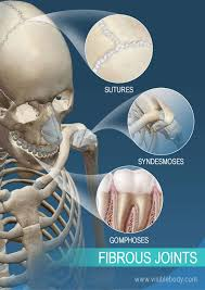 types of fibrous joints. sutures, syndesmoses, and gomphoses: fibrous joints types of o