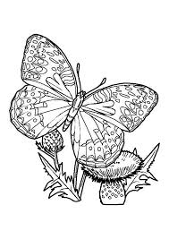 picture of a butterfly to colour. Contemporary Butterfly Butterfly Picture To Colour On Of A U