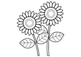 ひまわり二輪のぬりえ線画イラスト素材 イラスト無料