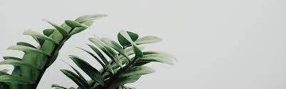 Aesthetic Minimalist Plant Desktop ...