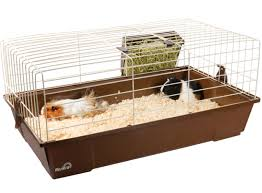 a cage that s clearly too small for two pigs