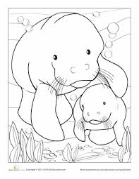 manatee coloring page 2. Wonderful Page Worksheets Manatee Coloring Page And 2 R