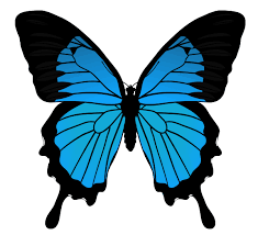 drawing butterfly pictures.  Drawing Drawingbutterfly_55_mountain_blue In Drawing Butterfly Pictures D