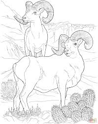Small Picture Desert animals coloring pages Free Printable Pictures