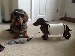 tag archive for next dachshund lamp  sausagetails