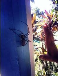 greenix pest control reviews. Interesting Reviews Biggest Spider Weu0027ve Ever Found  Greenix Pest Control Dublin  Intended Reviews V