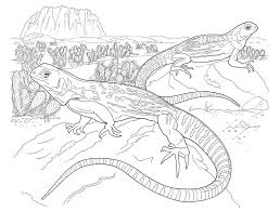 Small Picture Desert Coloring Pages fablesfromthefriendscom