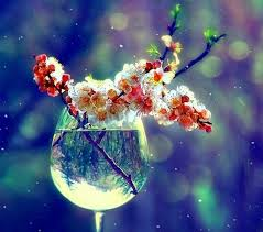 cool flower wallpapers flower flowers glass cool aster flower hd wallpaper for hd 169 flowers to