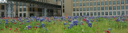 Image result for   texas a&m university