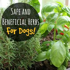 ... Safe and Beneficial Herbs for Dogs