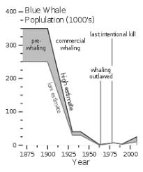 Blue Whale Wikipedia