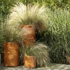 Zet Een Gras Op Je Terras Siergrassen In Pot