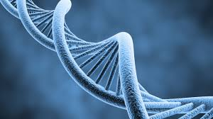 Image result for dna double helix images