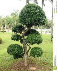 Garten Baume Johncalle