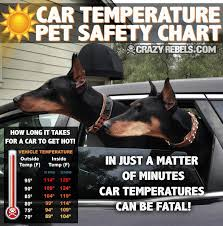 Hot Car Awareness Crazyrebels Com