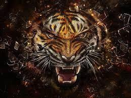 Tigers Wallpaper: Angry Tiger