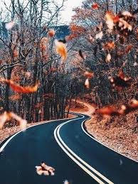 fall wallpaper for iphone 6 tumblr. Delighful For Autumn Fall And Leaves Image On Fall Wallpaper For Iphone 6 Tumblr A