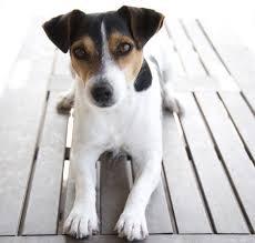 Is Horse Dewormer Safe For Dogs Smartpak Blog