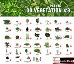 Small Picture SKETCHUP TEXTURE SKETCHUP 3D MODEL VEGETATION