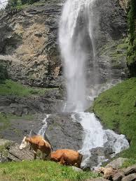Resultado de imagem para vacas pastando cachoeira