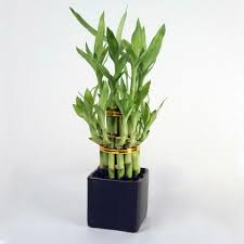office feng shui plants. Feng Shui Plants For Harmony And Positive Energy In The Living Room Office I