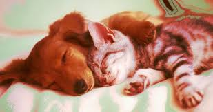 kittens and puppies sleeping. Unique Puppies Cats And Dogs Sleeping Together  Itu0027ll Be Anarchy On Kittens And Puppies Sleeping T