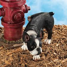 HumicGreen   You can stop dog urine from killing your grass