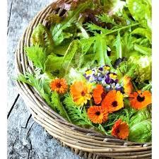 homemade weed safe for vegetable garden vegetable garden weed medium size of organic
