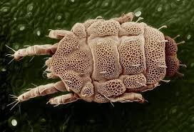 how to remove dust from air. Plain Air Dust Mites Are Invisible To The Naked Eye But Problems They Cause  Not They Occur Naturally And Found In Nearly All Homes So Eradicating Them  With How To Remove From Air 1