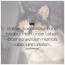 Katzenspruch Instagram Posts Gramhanet