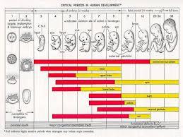 Critical Periods In Human Development