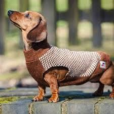 чарли: лучшие изображения (28) | Одежда для собак, Собаки и ...