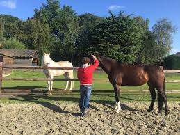 Coaching Door Paarden