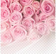 rose pink flower wallpaper png