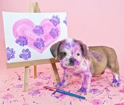 even with non toxic paints limit paint to the paws for easier cleanup