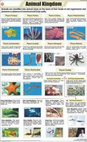 Animal Kingdom Classification Chart Manufacturer Supplier