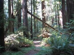 Grizzly creek redwoods state park overview. A Small Campground In The Redwoods Review Of Grizzly Creek Redwoods State Park Carlotta Ca Tripadvisor