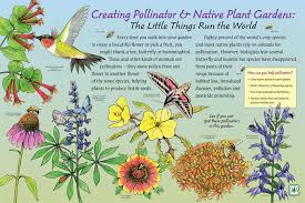 Small Picture Native Plants Pollinators Nancy Seiler