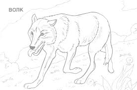 Coloring Pages Of Wild Animals Kids Throughout Animal