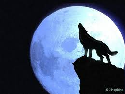 wolf howling at the moon.  Wolf Howling At The Moon By SHopkins On DeviantArt On Wolf At The Moon