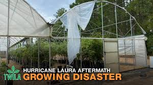 This Week In Louisiana Agriculture - Hurricane Laura Aftermath -- Growing  Disaster | Facebook