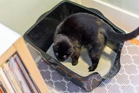 image cat litter. The Best Cat Litter Boxes: Reviews By Wirecutter | A New York Times Company Image Cat Litter