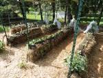 Сад и огород своими руками валерий украина 194