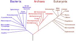 Microorganism Wikipedia