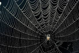 Spider Web Pattern Classy Why Spiders Decorate Their Webs